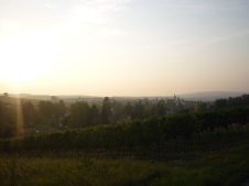 Cycling through vineyards all day sweeet
