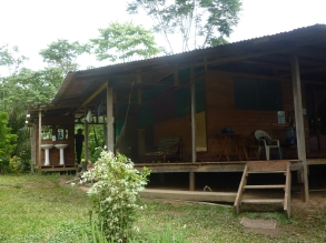 The jungle lodge